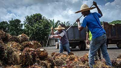 sector-plantation
